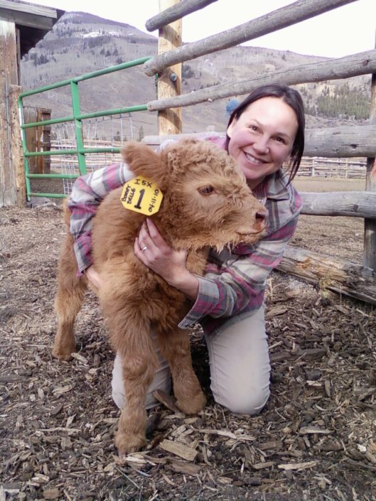 Baby Scottish Highland Beef