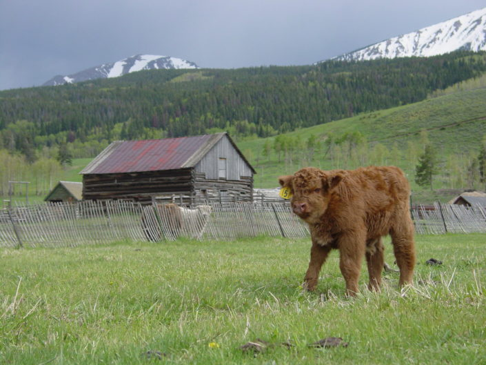 High Country Highlands side of beef colorado